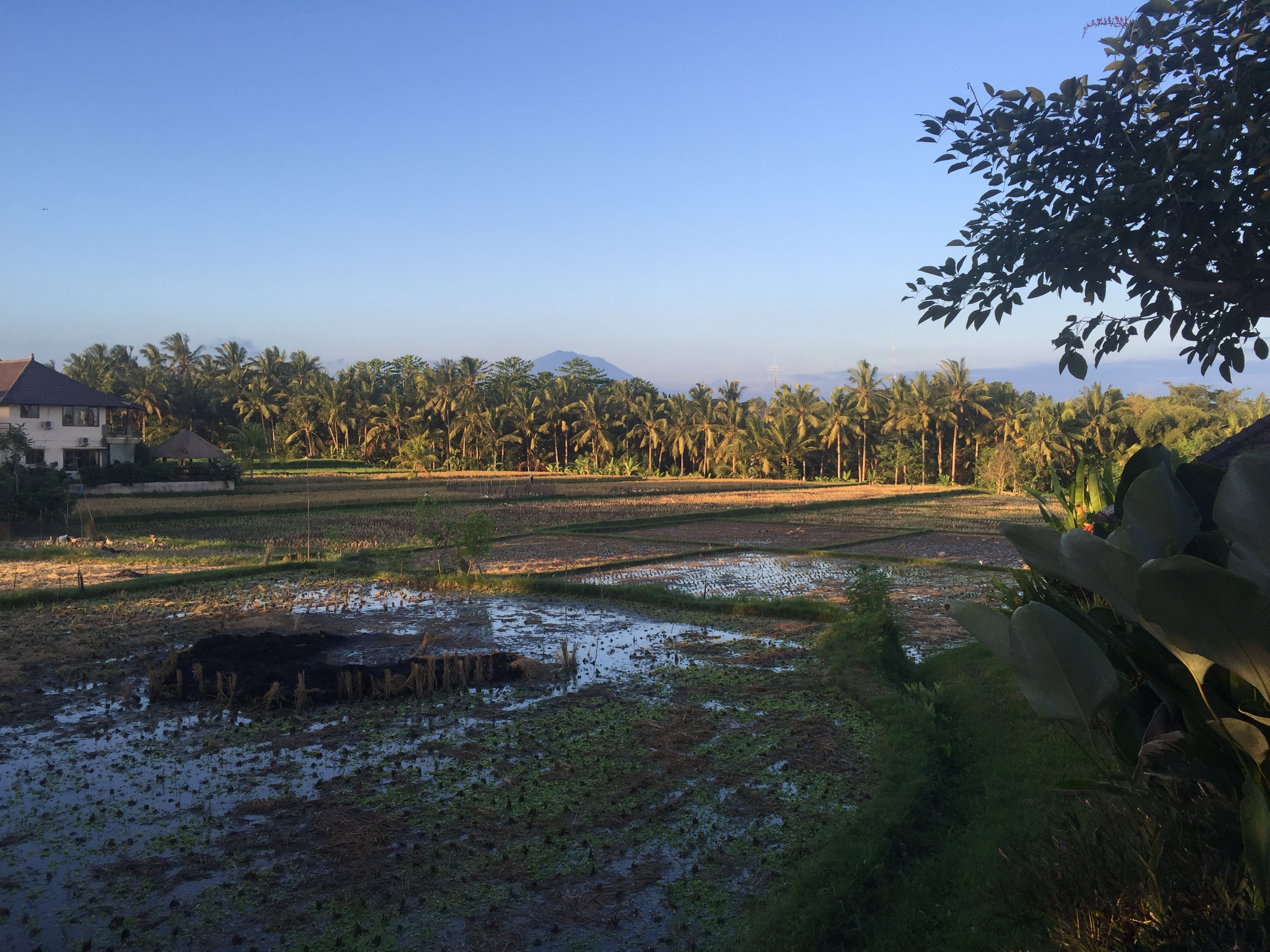 Restaurant view at Samara Villas & Restaurant, Ubud